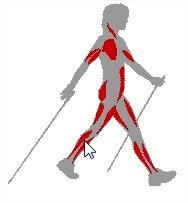 Nordic walking ou marche nordique avec batons avantages mozilla firefox